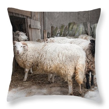 Knit One Purl Two Throw Pillow
