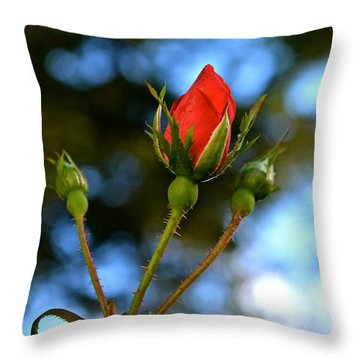Knockout Rosebud Throw Pillow