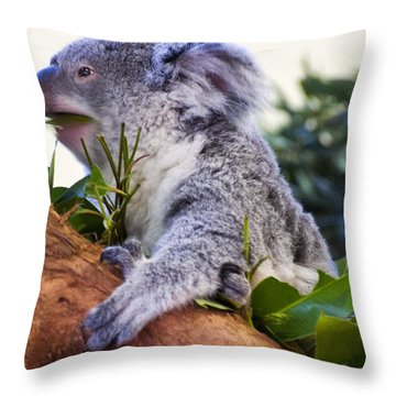 Koala Eating In A Tree Throw Pillow