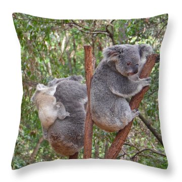 Koala Family Outing Throw Pillow
