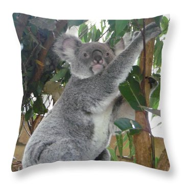 Koala Stretching Throw Pillow