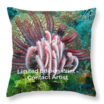 Komodo Island 6 Throw Pillow