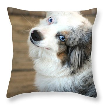 Kora The Australian Shepherd Throw Pillow