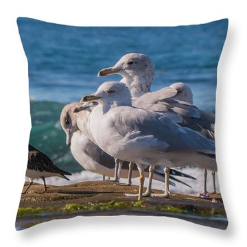 La Jolla Birds Throw Pillow