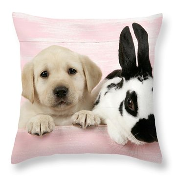 Lab Puppy And Bunny Throw Pillow by John Daniels