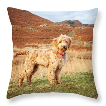 Throw Pillow featuring the digital art Labradoodle Puppy by Mike Taylor
