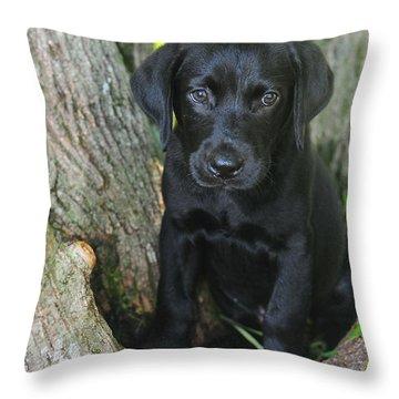 Labrador Retriever Puppy Throw Pillow by Catherine Reusch Daley