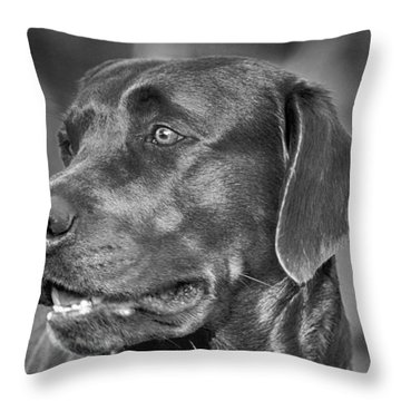Labrador Sweetie Throw Pillow