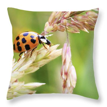 Lady Bug On A Warm Summer Day Throw Pillow