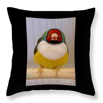 Lady Gouldian Throw Pillow by K L Kingston