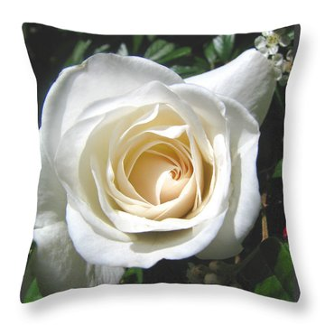 Throw Pillow featuring the photograph Lady In White by Brooks Garten Hauschild