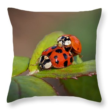 Ladybird Coupling Throw Pillow by Rona Black