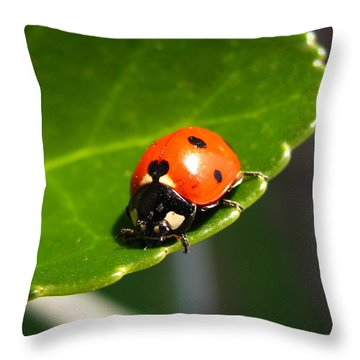 Ladybird Throw Pillow by Eva Csilla Horvath