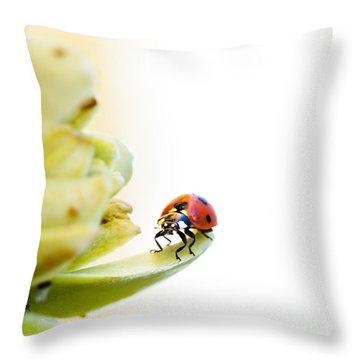 Ladybird On Desert Flower Throw Pillow