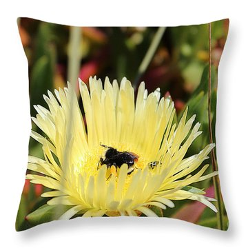 Throw Pillow featuring the photograph Ladybug And A Bumblebee by Kevin Ashley