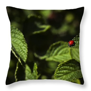 Throw Pillow featuring the photograph Ladybug by Bradley R Youngberg