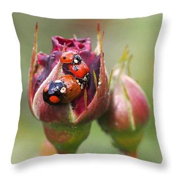 Ladybug Foursome Throw Pillow