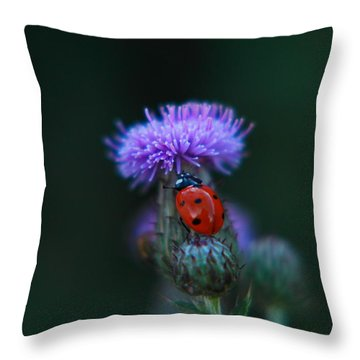 Ladybug Throw Pillow by Jeff Swan
