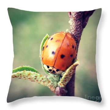 Throw Pillow featuring the photograph Ladybug  by Kerri Farley