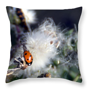 Throw Pillow featuring the photograph Ladybug by Linda Cox