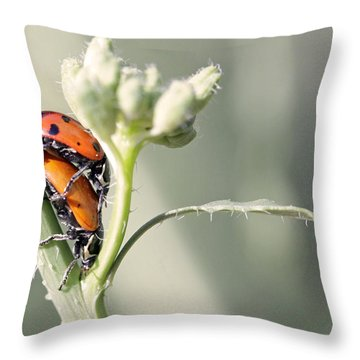 Ladybug Love Throw Pillow by Shoal Hollingsworth