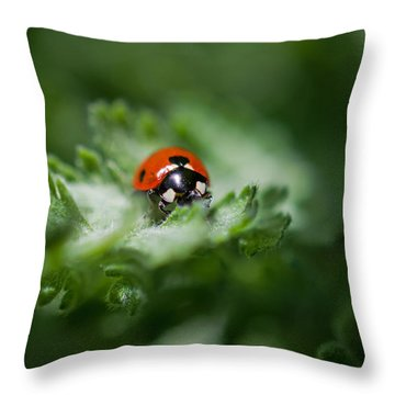 Ladybug On The Move Throw Pillow by Jordan Blackstone