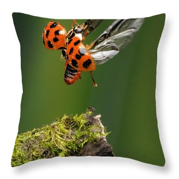 Ladybug Taking Off Throw Pillow by Scott Linstead