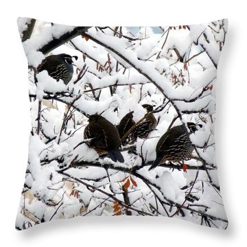 Lake Country Quail Throw Pillow by Will Borden