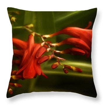 Lambency Throw Pillow