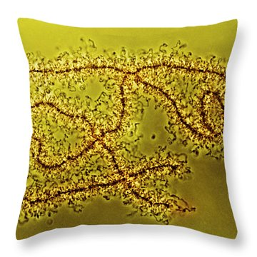 Lampbrush Chromosomes Newt, Lm Throw Pillow by Science Source