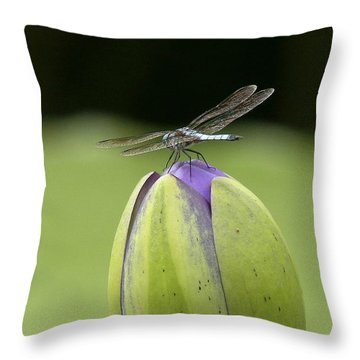 Landing Pad Throw Pillow by Yvonne Wright