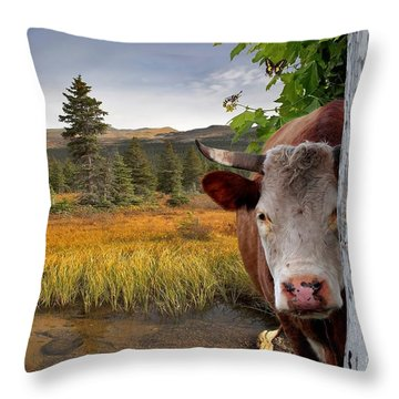 Landscape - Animals - Peek A Boo Cow Throw Pillow by Liane Wright