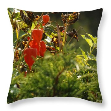 Throw Pillow featuring the photograph Lantern Plant by Brenda Brown