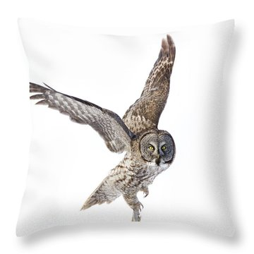 Lapland Owl On White Throw Pillow
