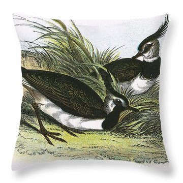 Lapwing Throw Pillow by English School