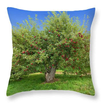 Large Apple Tree Throw Pillow