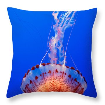 Large Colorful Jellyfish Atlantic Sea Nettle Chrysaora Quinquecirrha  Throw Pillow by Jamie Pham