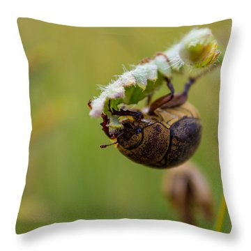 Throw Pillow featuring the photograph Large Lunch by Rhys Arithson