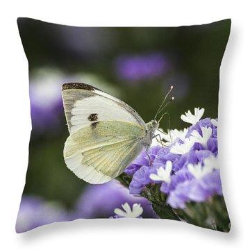 Large White Pieris Brassicae  Throw Pillow by Eyal Bartov