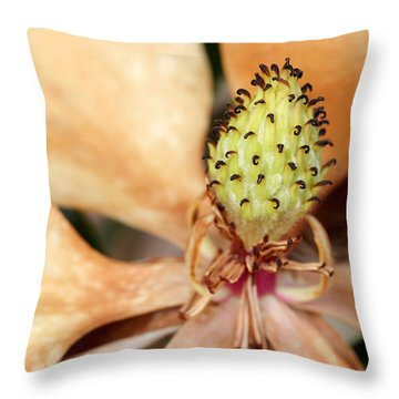 Last Days Of A Magnolia Throw Pillow by Sabrina L Ryan