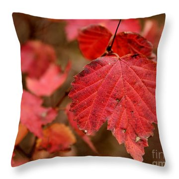 Last Fall Colors Throw Pillow