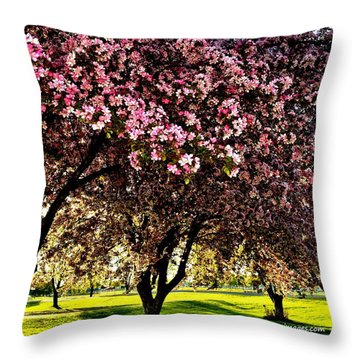Late Afternoon At Lake Park Throw Pillow