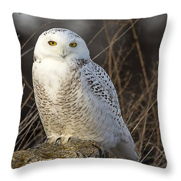 Late Season Snowy Owl Throw Pillow