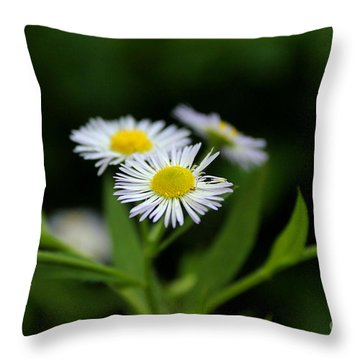 Late Summer Bloom Throw Pillow