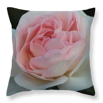 Throw Pillow featuring the photograph Late Summer's Rose by Patricia Hiltz