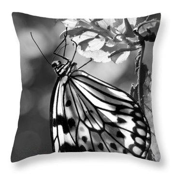 Lavalier Throw Pillow by Nikolyn McDonald