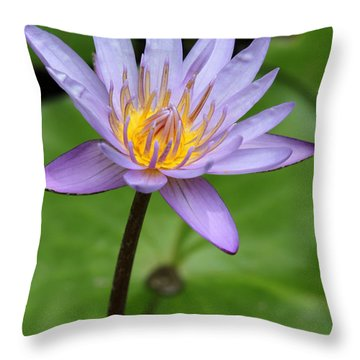 Lavendar And Green Throw Pillow by Sabrina L Ryan