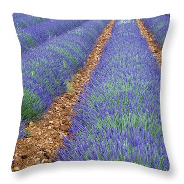 Lavendel 2 Throw Pillow by Arterra Picture Library