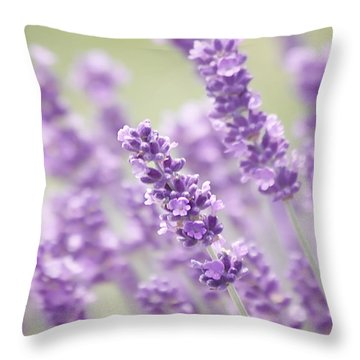 Lavender Dreams Throw Pillow by Kim Hojnacki