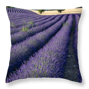 Lavender Fields Throw Pillow by Brian Jannsen